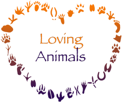 Loving Animals