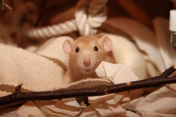 Loving Animals - Online Kurs für Tierhalter und Tierhalterinnen